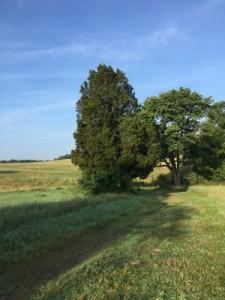 Virginia trail running